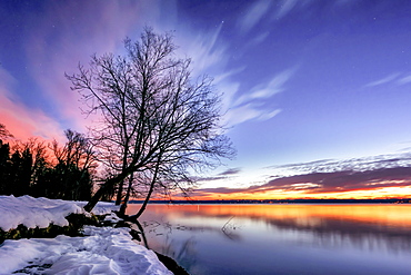 Bare tree on a winter morning at sunrise on Lake Starnberg, Tutzing, Bavaria, Germany