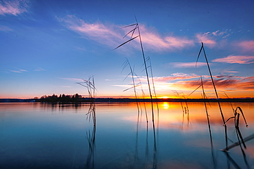 Reeds at sunrise on Lake Starnberg, Bavaria, Germany