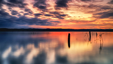 Deadwood at sunrise on Lake Starnberg, Bavaria, Germany