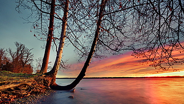 Trees at sunrise on Lake Starnberg, Tutzing, Bavaria, Germany