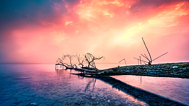 Deadwood in Lake Starnberg at sunrise, Bavaria, Germany