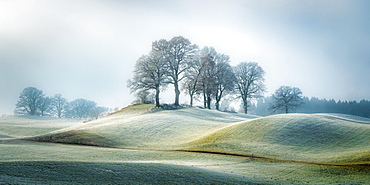 Trees in winter morning near Bichl with hoarfrost on the grasses of the hilly landscape, Bavaria, Germany