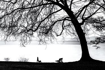 Tree silhouette on Lake Starnberg, Tuting, Bavaria, Germany, black and white