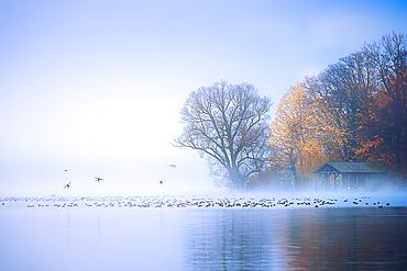 Fog on Lake Starnberg, Roseninsel, Feldafing, Bavaria, Germany