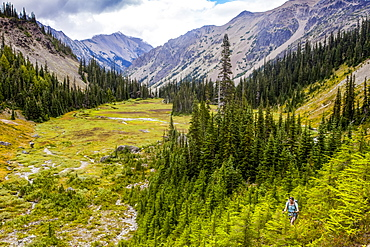 Woman backpacking through forest, Royal Basin, Olympic Mountains, Olympic National Park, Washington, United States of America