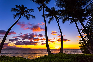 The sun setting through silhouetted palm trees, Wailea, Maui, Hawaii, United States of America