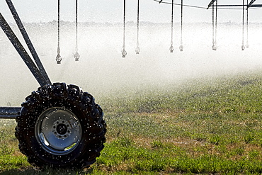 Close-up of sprinkler heads spraying a green grain field, Mossleigh, Alberta, Canada