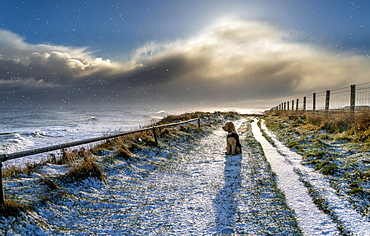 Dog wearing a coat sits on a snow-covered trail along the water's edge looking out to the waves of the River Tyne, South Shields, Tyne and Wear, England