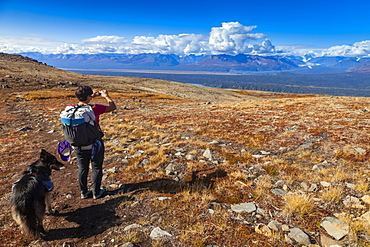 Woman backpacker and her dog pause to take a picture of the Alaska Range while hiking on the Kesugi Ridge Trail in Denali State Park, Alaska in the autumn, Alaska, United States of America