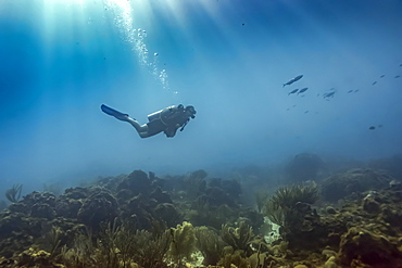 Scuba diver underwater at the dive site Cemetery Wall, South side of Roatan Island, Bay Islands Department, Honduras