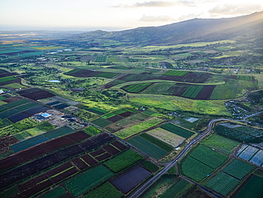Aerial image of the agricultural land on the island of Oahu, Oahu, Hawaii, United States of America