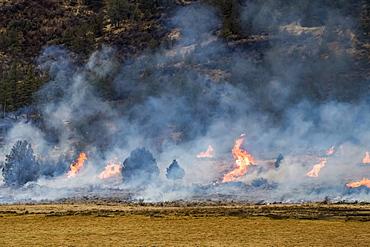 Flames of a prescribed burn, Olene, Oregon, United States of America