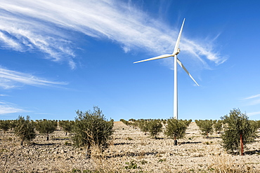 Wind turbine amongst olive trees, Campillos, Malaga, Andalucia, Spain