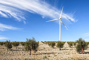 Wind turbine amongst olive trees, Campillos, Malaga, Andalucia, Spain