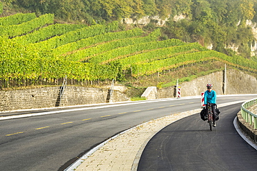 Female cyclist along a pathway with rolling hillside vineyards and mist in the river valley, North of Remich, Luxembourg