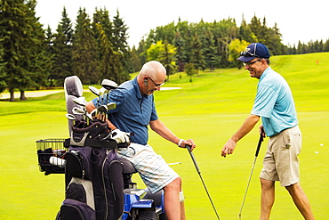 An able bodied golfer teams up with and assists a disabled golfer using a specialized powered golf wheelchair while they are putting together on a golf green, playing best ball, Edmonton, Alberta, Canada