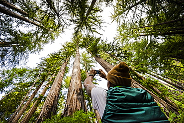 A man stands photographing the tall trees in a forest, Julia Pfeiffer Burns State Park, California, United States of America