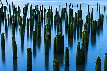 Pilings in the river mark the location of bygone industry, Astoria, Oregon, United States of America