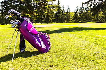 A pink golf bag with a set of golf clubs on the green grass of a golf course, Edmonton, Alberta, Canada