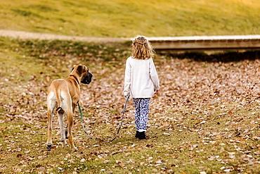 A little girl walking her Great Dane dog in a city dog park on a warm fall night, Edmonton, Alberta, Canada