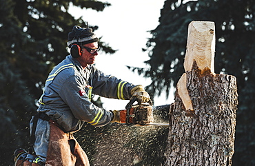 Artist using chainsaw to cut wooden sculpture from a tree, Edmonton, Alberta, Canada