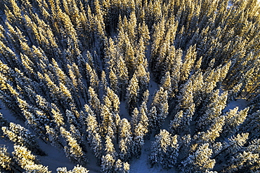 Aerial view of snow-covered evergreen trees, Alberta, Canada
