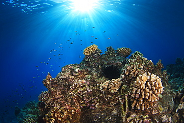Wide view of reef with sunburst, Island of Hawaii, Hawaii, United States of America