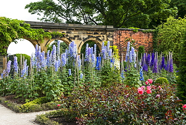 Flowers blossoming in The Alnwick Garden, Alnwick, Northumberland, England