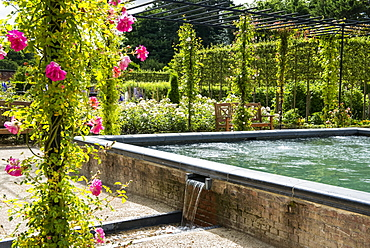 Roses on pergola near source pool in The Alnwick Garden, Northumberland, England
