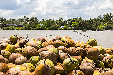 Coconuts at a coconut processing family owned business in the Mekong Delta, Ben Tre, Vietnam