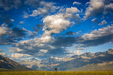 A man walks across a grass field with the majestic mountains of Kluane National Park in the background, Destruction Bay, Yukon Territory, Canada