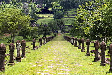 Causeway bordered by sandstone posts, Vat Phou Temple Complex, Champasak, Laos