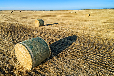 Hay bales in a cut field with long shadows at sunrise and blue sky, Alberta, Canada