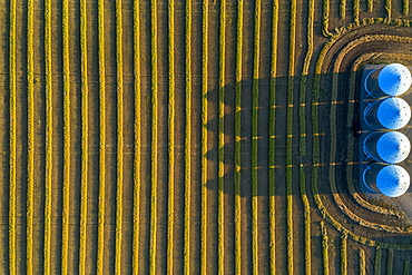 View from directly above of four large metal grain bins and canola harvest lines at sunset with long shadows, Alberta, Canada