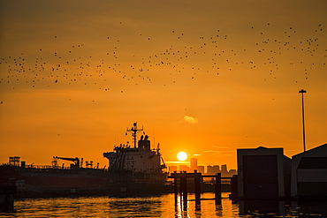 An orange hue is set over Vancouver as the golden sun sets with a silhouette of ships in the harbour and a flock of birds, Vancouver, British Columbia, Canada