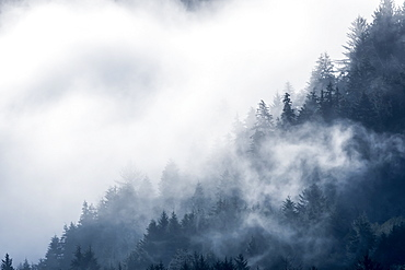 Clouds shroud the forest on a hillside in Siletz Bay National Wildlife Refuge, Lincoln City, Oregon, United States of America