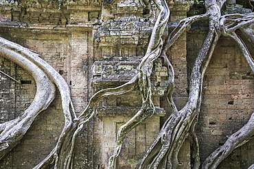 Prasat Chrey (Structure N18) engulfed by the roots of a fig tree in Prasat Sambor, the North Group, Sambor Prei Kuk, Kompong Thom, Cambodia