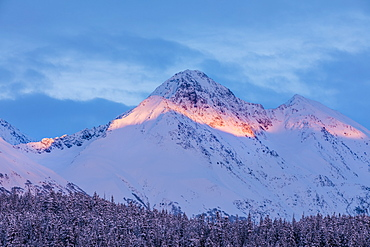 Deep snow covers a forest of spruce trees and warm sunset light illuminating a snowy mountain in the background, Kenai Peninsula, South-central Alaska, Moose Pass, Alaska, United States of America