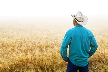 Man with cowboy hat standing and looking out to a ripe golden barley field at sunrise with fog, East of Calgary, Alberta, Canada