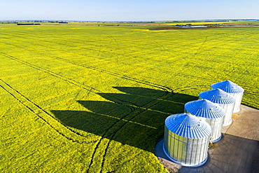 Aerial view of large metal grain bins in a green field of canola with long dramatic shadows across the field and blue sky, East of Calgary, Alberta, Canada