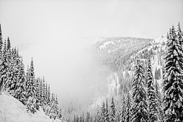 Forests on the mountains covered in snow in the fog, Whitewater Resort, Nelson, British Columbia, Canada