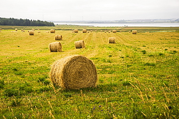 Hay bales scattered on a field along the coast, Prince Edward Island, Canada