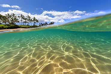 Split view of the palm trees along the coastline and underwater, Maui, Hawaii, United States of America