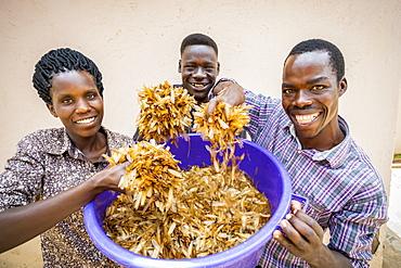 Staff holding a bucket full of an abundance of White ants (Isoptera), Gulu, Uganda