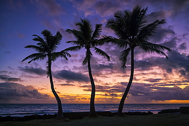 Sunrise over the ocean with three palm trees in the foreground, Waikiki, Oahu, Hawaii, United States of America