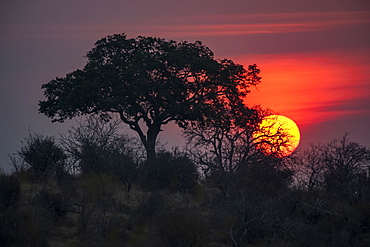 Sun sets behind a tree in Ruaha National Park, Tanzania