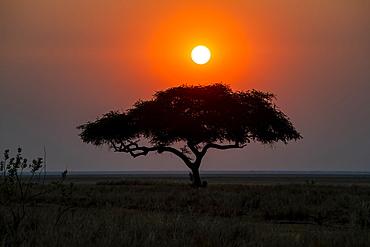Sun setting behind lone acacia tree on the edge of the Katavi Plain in Katavi National Park, Tanzania