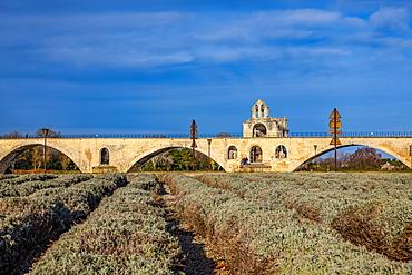 Pont Saint-Benezet, Avignon, Provence Alpes Cote d'Azur, France