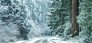 Snow storm in Stanley Park, Vancouver, British Columbia, Canada