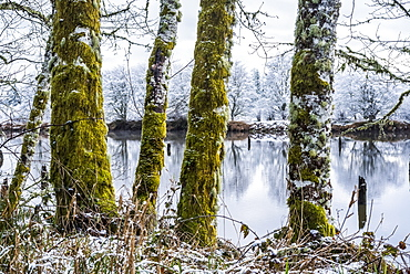 A dusting of snow falls at Lewis and Clark National Historical Park, Astoria, Oregon, United States of America